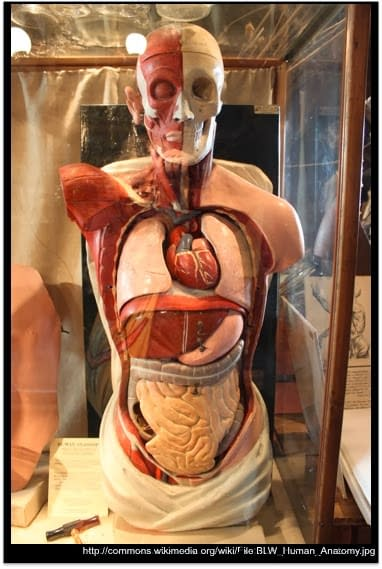 complexitatea corpului uman - Doctor Dinu